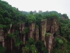 Green tropical forest on  rock at bottom of pond  top view Stock Footage