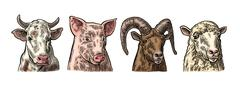 Farm animals icon set. Pig, cow, sheep and goat heads Stock Illustration