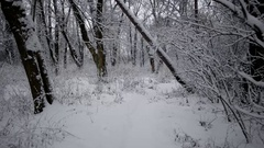 Winter Trip Through the Woods. Walking on a Path Inside a Forest Covered in Stock Footage