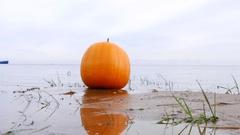 Large ripe pumpkin lie on lake sandbank, closeup shot, against water surface Stock Footage
