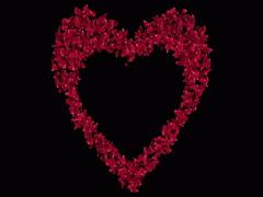 Red Rose Sakura Flower Petals In Heart Shape Alpha Matte Placeholder Loop 4k Stock Footage