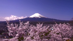 Mount Fuji and blooming cherry blossoms,  Yamanashi Prefecture, Japan Stock Footage