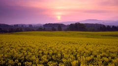 Flower field in Takikawa, Hokkaido, Japan Stock Footage