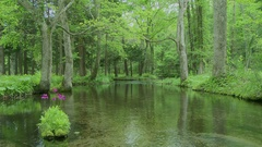 Pond in the forest and grassland, Japan Stock Footage