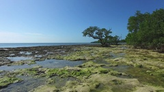 Aerial Over Rocky Tide-Pool Under Low Tree, 4K Stock Footage