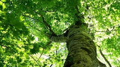 Green foliage and filtering light Stock Footage