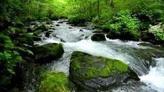 Oirase Mountain Stream, Aomori Prefecture, Japan Stock Footage