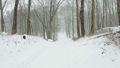 Forest in winter, the smooth movement of the camera on a forest road through the Stock Footage