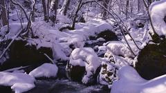 Snow at Oirase Mountain Stream, Aomori Prefecture, Japan Stock Footage