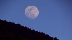 Moon rising over trees, Shizuoka Prefecture, Japan Stock Footage