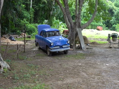 Movement to broken blue retro car on the open air yard in tropical jungle Stock Footage