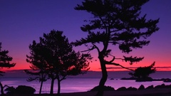 Trees at dawn at Tanesashi Coast, Aomori Prefecture, Japan Stock Footage