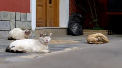White and brown cats and old age that slumbers in the sun in concreted Stock Footage