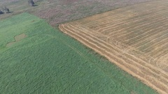 The edge of a field after harvest Stock Footage