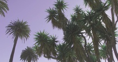 Walking through palm trees with sunny blue sky. Bottom view. Stock Footage