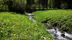 Mountain Stream Flows Through Lush Green Grass Stock Footage