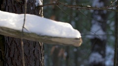 Forest in winter-interesting tree covered in snow- pan and rack focus Stock Footage