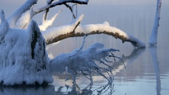 Snag. Steam over the river in a frosty winter day Stock Footage