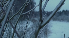 Branch of the tree in the forest covered with ice and snow Stock Footage