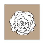 Deep contour rose, top view isolated sketch vector illustration Stock Illustration