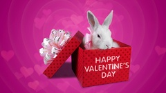 A happy couple of rabbits in love, Valentines Day greeting card Stock Footage