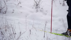 Skiers Ride in the Winter Forest Stock Footage