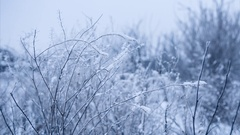 Calm winter weather with bushes covered with snow. Seamless loop Stock Footage
