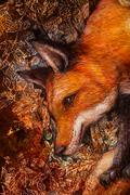 Red fox portrait, colorful painting with ornamental background Piirros