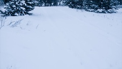 Calm winter weather. Spruce forest. Panning shot Stock Footage