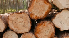 Sawn pine logs, shoot with dolly Stock Footage