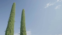 Two Tuscany Cypress Trees Background - 25FPS PAL Stock Footage