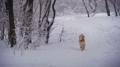 Dog Running Along a Path in the Winter Forest. Slow Motion Stock Footage