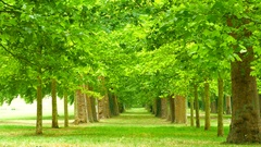 Trees in Versailles, Paris, France Stock Footage