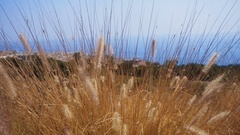 High yellow grass on a background of the beautiful blue sea Stock Footage