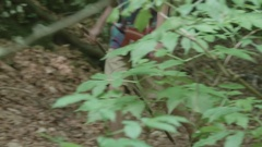 Explorer shall forward on a path through the green forest, dressed in Stock Footage