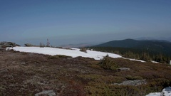 Panoramic landscape with juniper trees and snowy pasture on the north Stock Footage