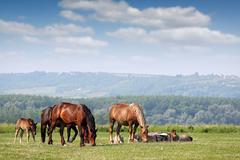 Herd of horses on pasture spring season Stock Photos