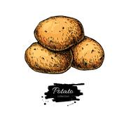 Potato vector drawing. Isolated hand drawn potatoes . Vegetable Stock Illustration