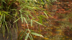 Thin branches of reeds bent to the stream in which the floating yellow leaves Stock Footage