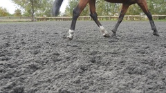 Foot of horse running on the sand. Close up of legs galloping on the wet ground. Stock Footage
