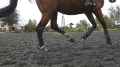 Foot of horse running on the sand. Close up of legs galloping on muddy ground. Stock Footage