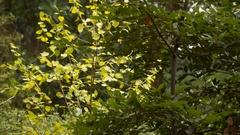 A branch of bush sunlit Stock Footage