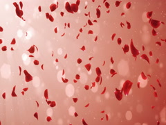 Flying Romantic Light Red Rose Flower Petals Falling Background Loop 4k Stock Footage