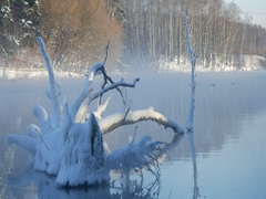 Snag covered with snow. Steam over the river in a frosty winter day Stock Footage