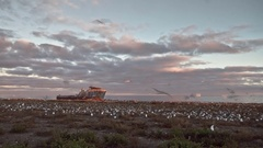 Colony of sea birds with shipwreck Stock Footage