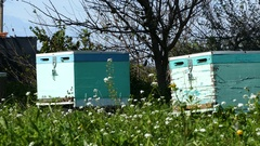 Two bee hive boxes in Amvrakikos Stock Footage