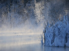 Winter, River and coastal thickets in frosty day Stock Footage