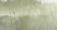 Slow motion of beach grass during winter storm Stock Footage