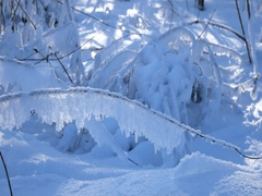 Winter forest. Frost.Sunlight shine through snow covered branches of trees Stock Footage