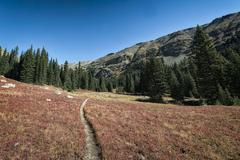 Trail to trees in rolling landscape Stock Photos